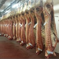 What was the result of the cattle grading trial at Slaney Foods?