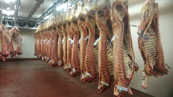 Quotes unchanged as beef factories return to business after adverse weather