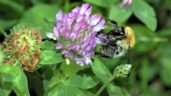 Farmers urged to make their land more pollinator-friendly