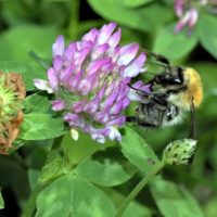 5 ways to to get farmyards buzzing again