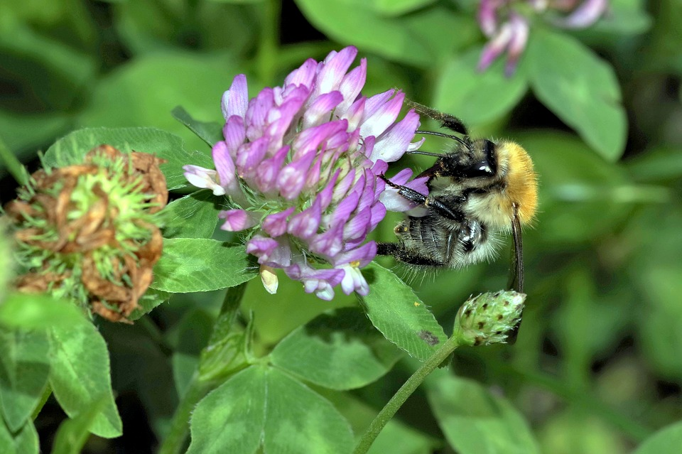 SuperValu launches 'Save the Bees' campaign
