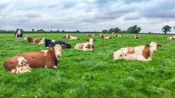 'Hypocrisy': Farming groups give cutting retort to Citizens' Assembly proposals