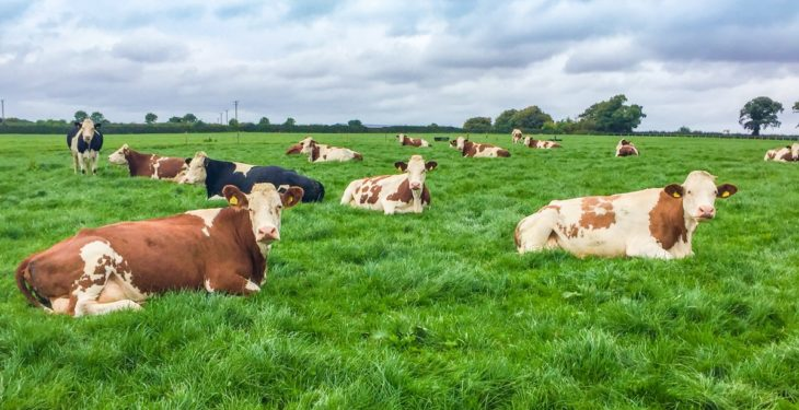 ICBF HerdPlus fees to rise with introduction of new charge per cow