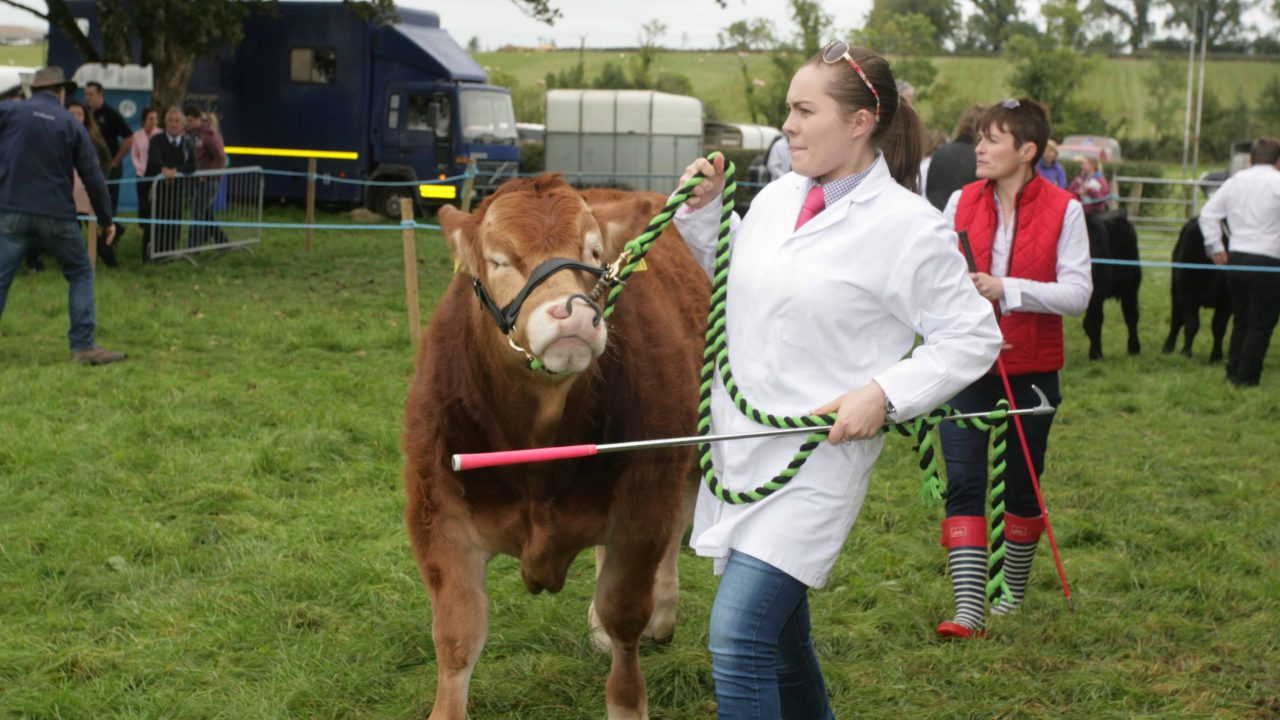 Agricultural show in the west of Ireland enters its 113th year