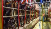 So what is the milking system that best meets your needs for the future?