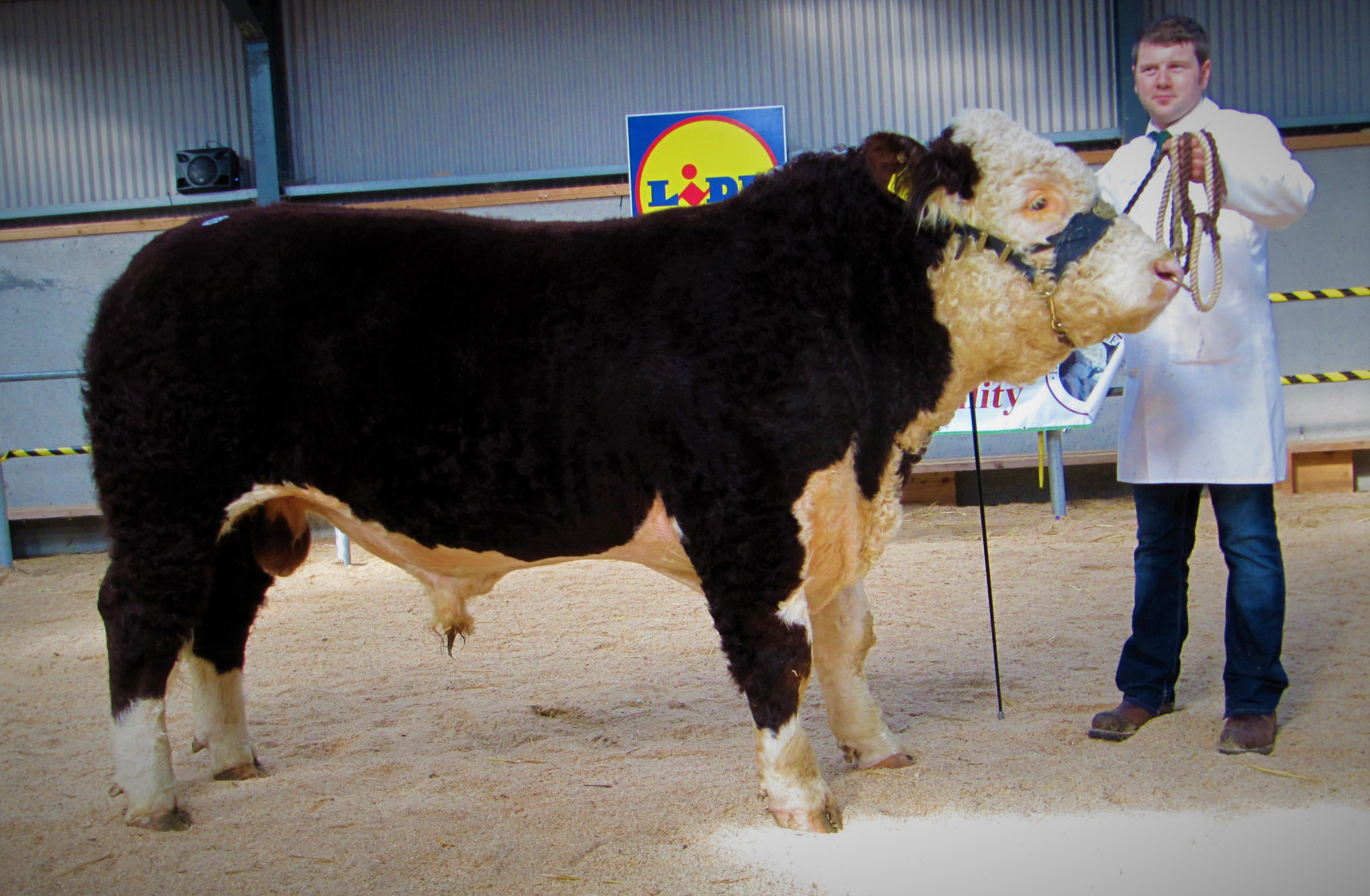 hereford show tullamore