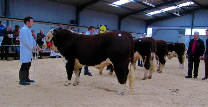 Pics: Large crowds and big money at Hereford show and sale