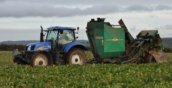 'Mixing beet and maize in the pit growing in popularity'