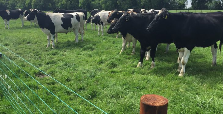Is there money to be made in black and white beef this winter?