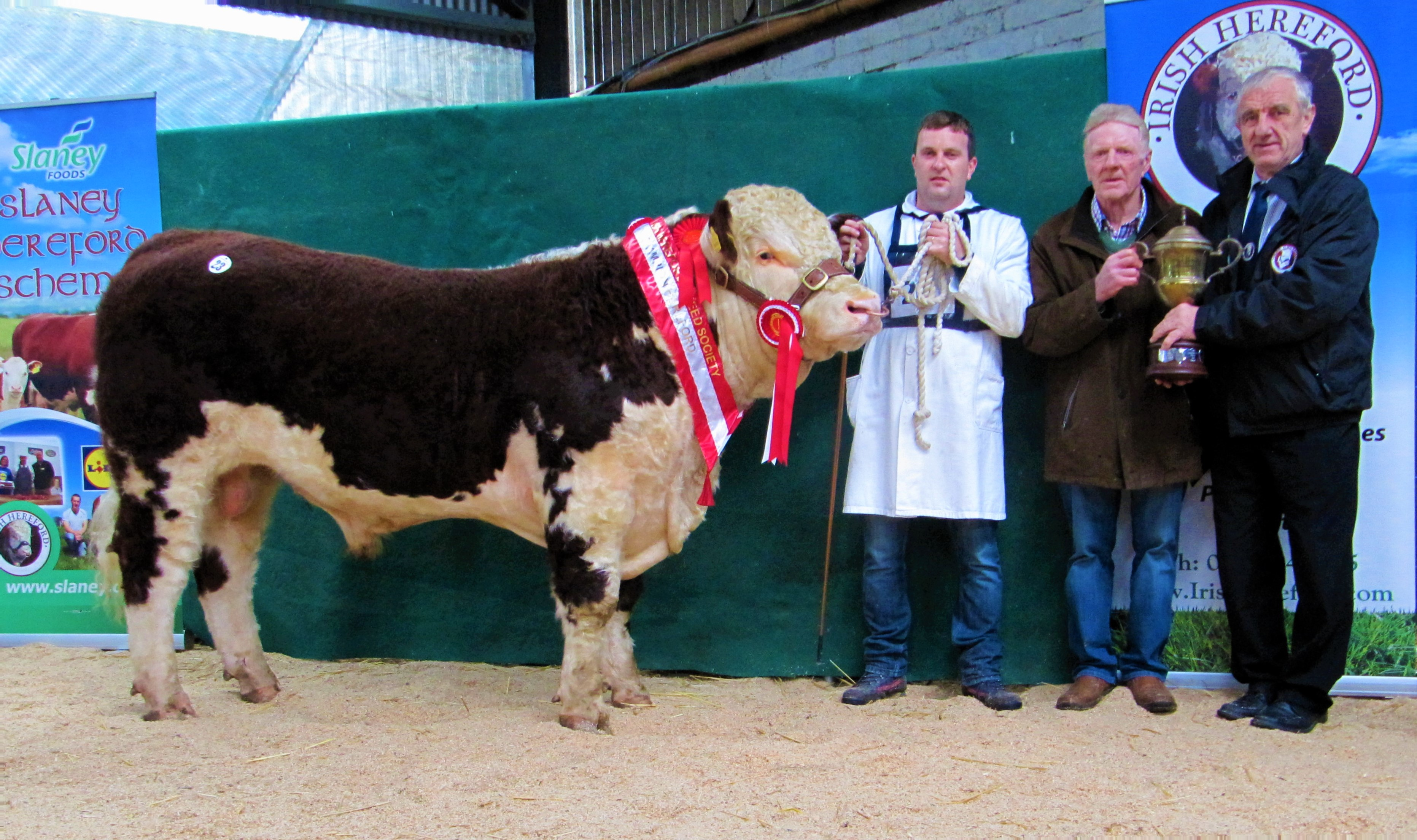 Hereford tullamore show