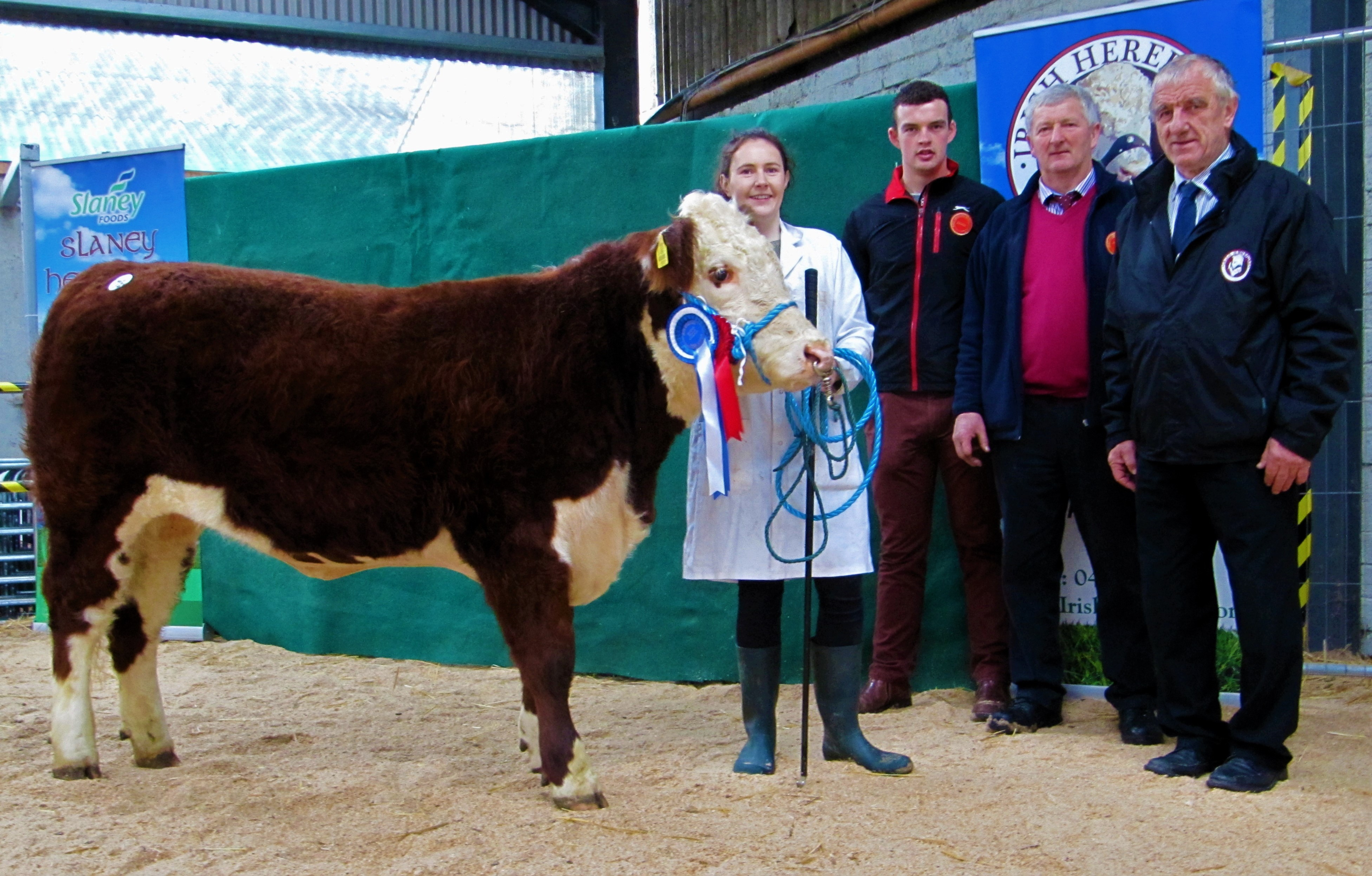 tullamore hereford show