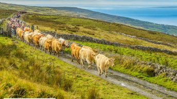 Burren Winterage hosts National Farming for Nature Award