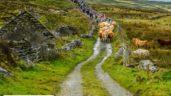 Burren farmer to lead Winterage Community Cattle Drive