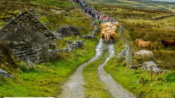Burren farmer to lead Winterage Community Cattle Drive
