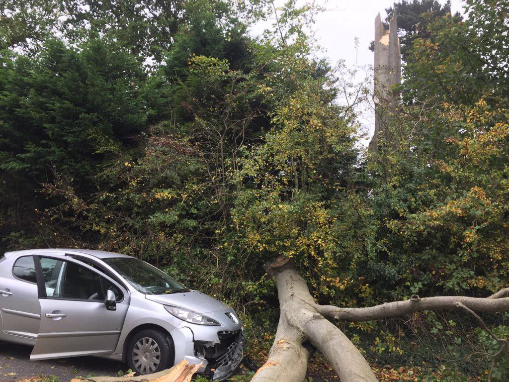 A driver narrowly escapes a falling tree uprooted by ex-hurricane Ophelia in Dunmurry, Co. Antrim