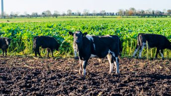 'Joined-up thinking' needed between dairy and beef