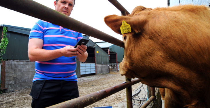 Which calf breed comes out on top for average daily weight gain?