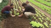 Deadline looming for applications to the horticulture investment scheme