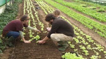 Bord na Móna cessation of peat harvesting 'devastating' for horticulture – Nolan