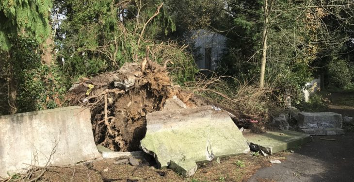 Pics: Scenes of destruction in Cork as farmers count the cost of Ophelia