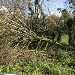 Ophelia cork, Met Eireann weather