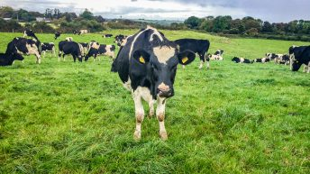 Executing the plan perfectly on a Co. Sligo dairy farm