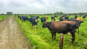 Dairy focus: Achieving a lifelong ambition on a greenfield site in Co. Offaly