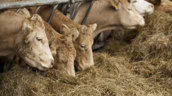 Beef processors show 'complete lack of respect' for producers