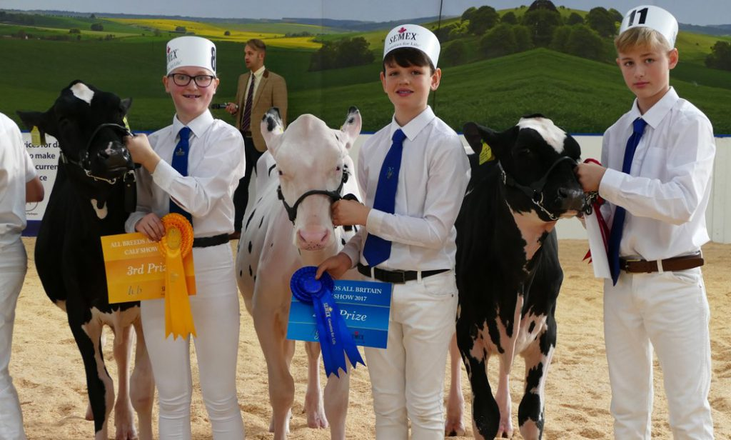 Northern Ireland Young Breeders judges at the All-Britain All-Breeds Calf Show