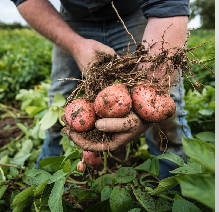 Potato growers get less than 20% of the retail price – Healy