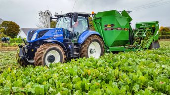 Fodder trade: How much is beet making in your area?