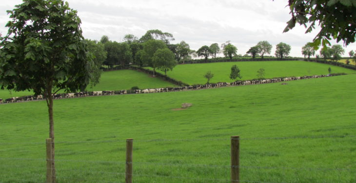 Dairy farm jobs rise by 41% over 6-year period