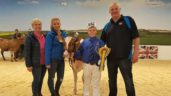 Antrim heifer scoops south-after show title in the UK