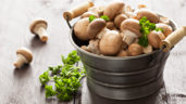 Mushroom firm enters administration just two years after £1.5m investment