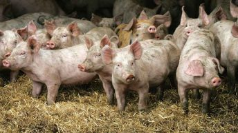 EU set to ban 'routine use' of medicated livestock feed
