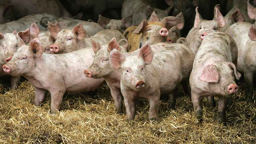 25 pigs rescued from slurry pit following collapse of slatted floor