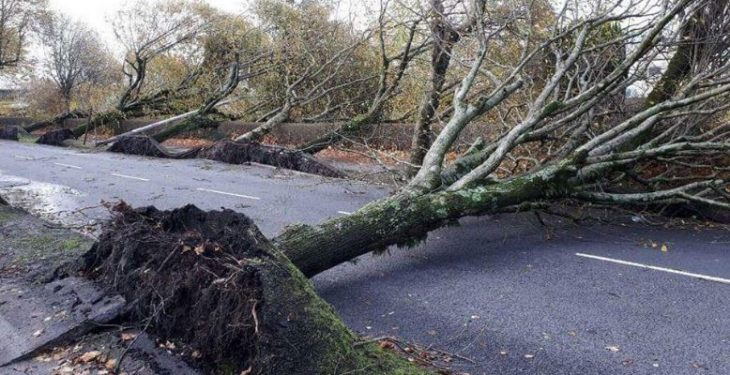 Department's assessment of storm's impact: Structural damage and outages on farms