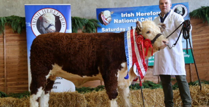 National Hereford Calf Show takes place this weekend