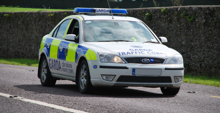 Gardaí investigate theft and butchering of lambs in fields