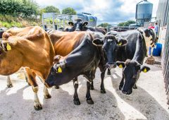 Tackling the labour challenge with automation on a 400-cow dairy farm