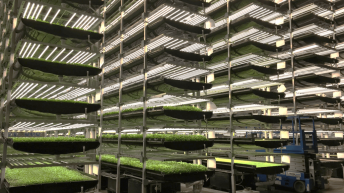 Organic farming on a shelf with hydroponics