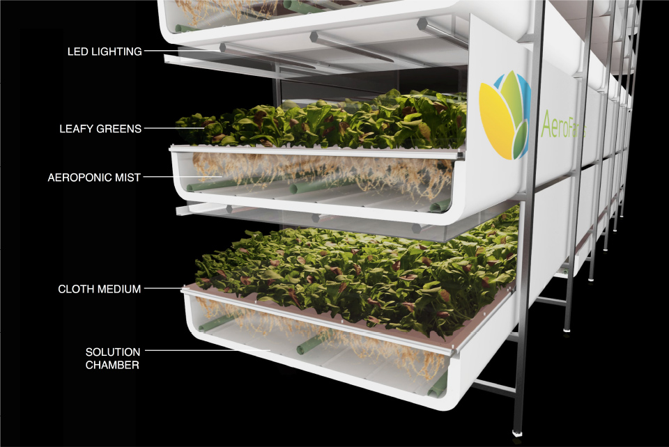Organic farming on a shelf with hydroponics - Agriland ie