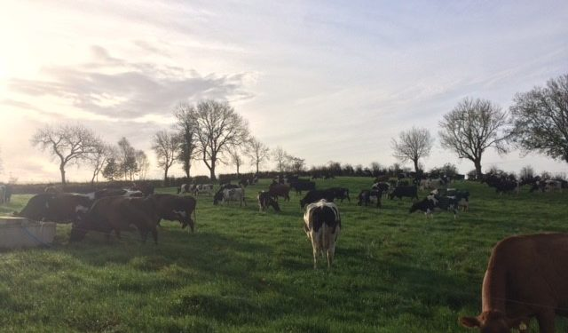 Grass advice: Cleaning final heavy covers and keeping your cows healthy