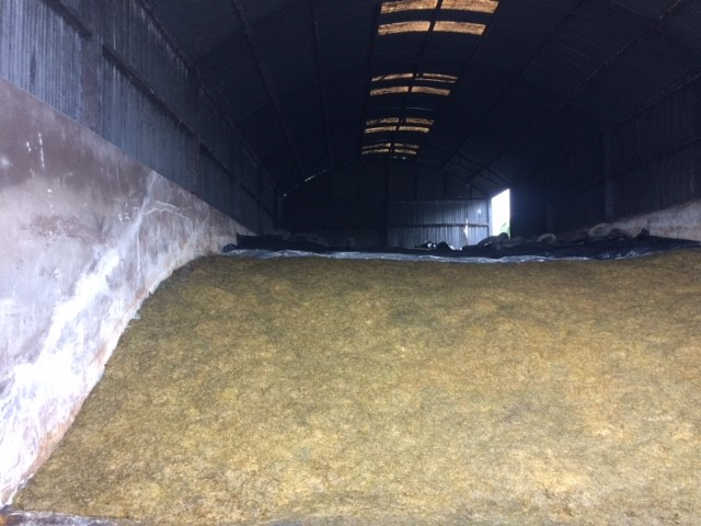 Silage to be fed this winter