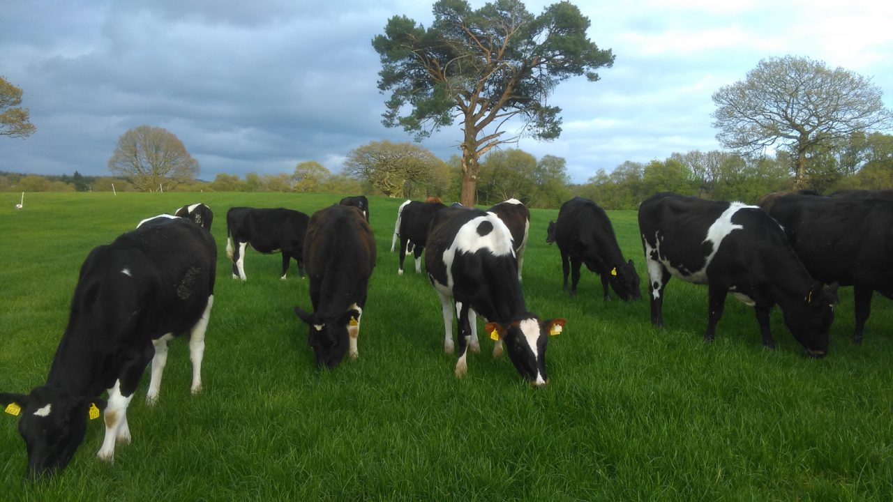 Development work will ring the changes at Glenstal Abbey farm
