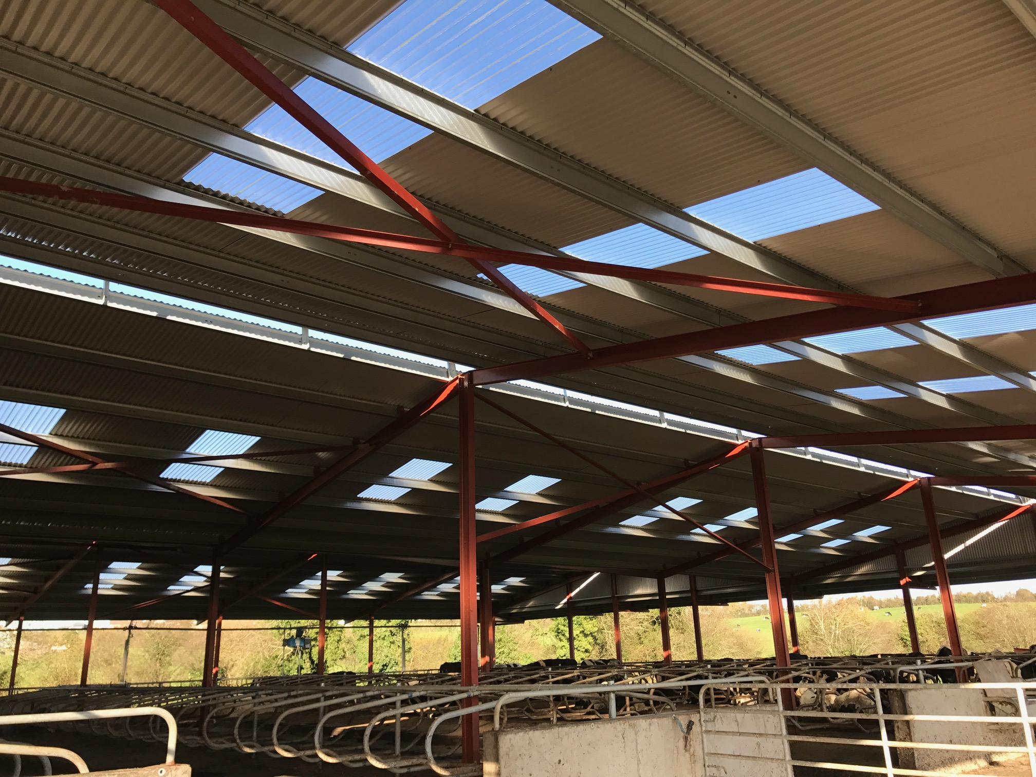 Buildings Focus Facilitating More Cows With A 147 Cubicle