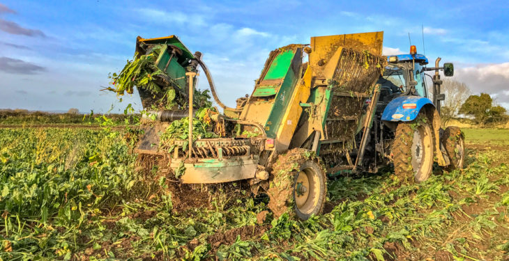 Forage focus: 'Savage' crops of beet pulled in Co. Kildare