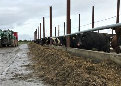 Dairy focus: Lessons learned from the first year milking 200 cows