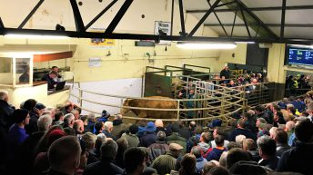 Pics: Buyers drive in-calf heifers to €3,050 at 'packed' Balla sale