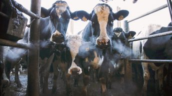 What are some of the challenges currently facing the dairy industry?